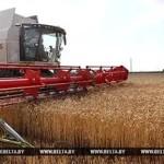 Первый миллион тонн зерна намолочен в Беларуси