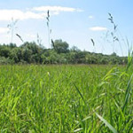 Хозяйства Гомельской области выполнили план по заготовке травянистых кормов