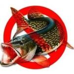 Запрет на лов щуки вводится в Беларуси с 1 марта