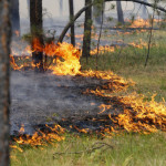 Новые правила пожарной безопасности в лесах утверждены в Беларуси