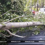В Беларуси из-за непогоды отмечались сбои в электроснабжении, повреждено 8 автомобилей