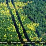 В Светлогорском районе 82-летняя женщина более трех суток провела по лесу