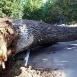 В Вилейском районе на микроавтобус упало дерево, погиб ребенок