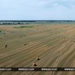 В Беларуси зерновые убраны на половине площадей