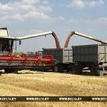 В Гомельской области зерновые убраны на половине площадей