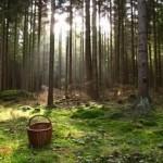 В Брестской области за сутки пропали шесть сборщиков ягод и грибов
