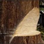 В Мозырском районе погиб вальщик леса