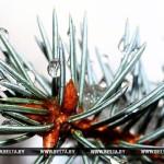 Температурный рекорд побит в Бресте 25 декабря