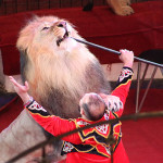 В гомельском цирке начался показ новой программы «Дед Мороз и африканские львы»
