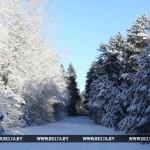 Холоднее всего прошедшей ночью было в Березинском заповеднике — около 20 градусов мороза