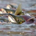 Совмин утвердил порядок проведения конкурса на предоставление в аренду рыболовных угодий фонда запаса