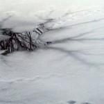 Провалившегося под лед 9-летнего мальчика спас в Сморгони очевидец