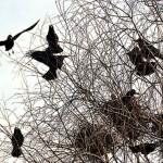 Уничтожение гнезд птиц в Беларуси запрещено до 15 августа