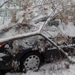Более 10 машин повредили упавшие из-за непогоды деревья в Гомельской области