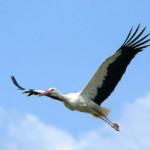 Каждый район Гомельской области выберет свою птицу-символ