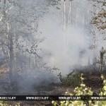 Спасатель погиб при тушении лесного пожара под Жлобином