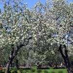 Яблоневый сад заложат возле Комсомольского озера в Минске к 100-летию ВЛКСМ