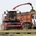 Месячник по заготовке кормов объявлен в Гомельской области