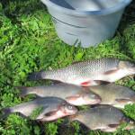 26 жніўня ў Петрыкаве пройдуць спаборніцтвы па летняй рыбалцы