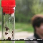 В Беларуси наблюдается второй пик активности клещей